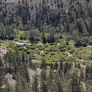 A view of multiple channels of Whychus Creek. Photo: Jay Mather.