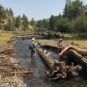 Data is collected next to some woody debris in the restoration area. Photo: Land Trust.