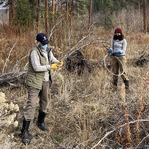 Volunteers remove barbed wire from Whychus Canyon Preserve. Photo: Land Trust.