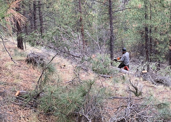Cutting and piling small-diameter juniper and ponderosa pine. Photo: Land Trust.