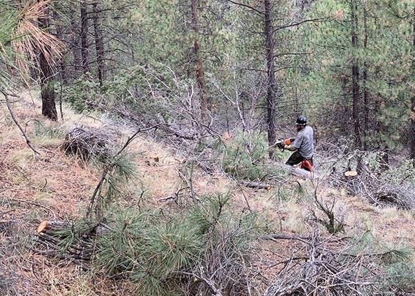 Cutting and piling small-diameter juniper and ponderosa pine. Photo: Land Trust.