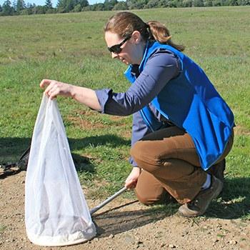 Tara demonstrates how to properly net Ohlone tiger beetles. Photo: Lynn Overtree.