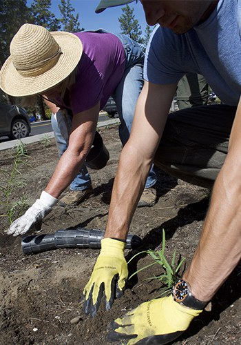 Volunteers plant and care for milkweed. Photo: Land Trust.