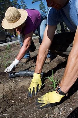 Volunteers plant native plants. Photo: Land Trust.
