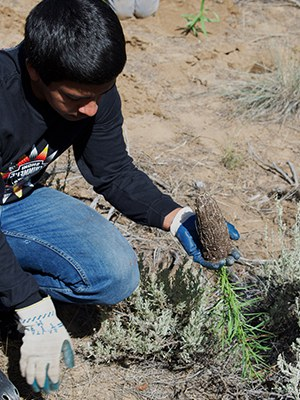 Volunteer with the Land Trust to care for and plant native plants. Photo: Land Trust.