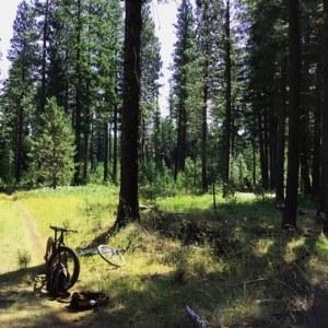 Bike through the quiet trails of the Metolius Preserve. Photo: Land Trust.
