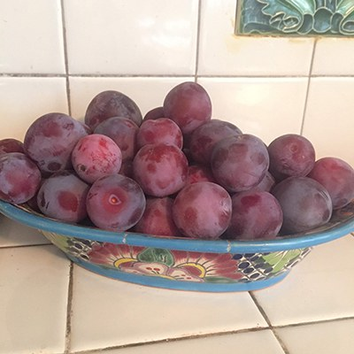 Don't forget about fruit in your climate victory garden! Plums grow well in Central Oregon. Photo: Land Trust.