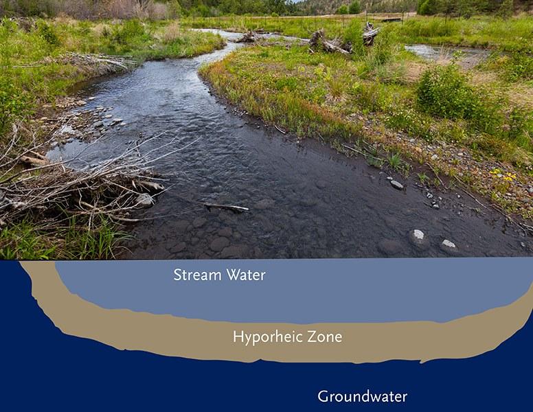 The hyporheic zone of Whychus Creek. Diagram: Land Trust (concept from Karen Jackson, Clemson University Cooperative Extension Service).