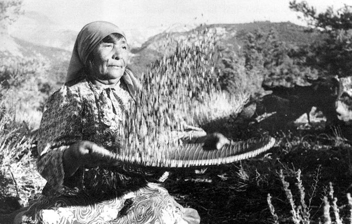 "Paiute woman with willow ""winnowing basket"" separating roasted pine nuts from their husk. Photo: Bowman Museum."