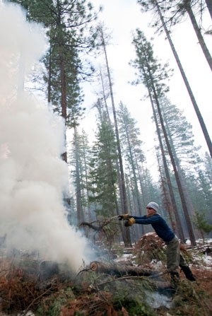 Forest restoration at the Metolius Preserve. Photo: Jay Mather.