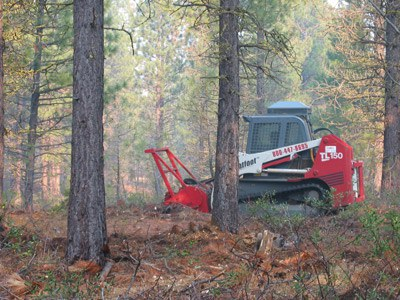 A mowing machine was used to remove brush that has grown in the absence of fire. Photo: Land Trust.