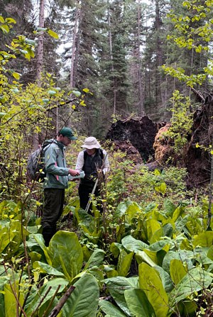 Land Trust staff take inventory of plant species at the Metolius River Preserve. Photo: Land Trust.