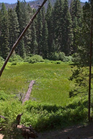 The fen at Metolius River Preserve. Photo: Jay Mather.