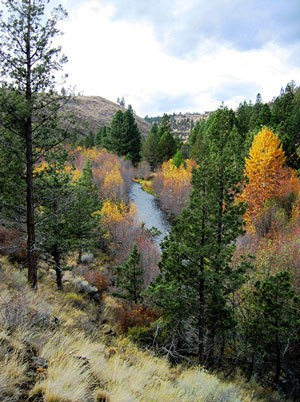 Fall colors at Whychus Canyon Preserve. Photo: Ron  Hoyt.