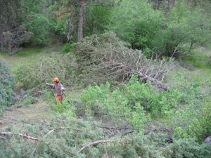 Building an aspen corral at Whychus Canyon Preserve. Photo: Land Trust.