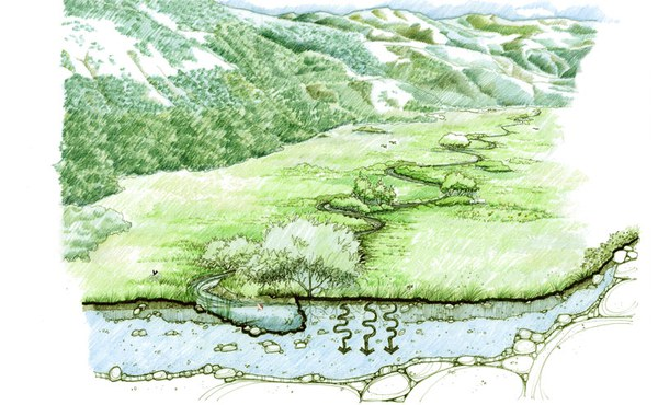 A meandering stream slows water, stores groundwater, and creates a lush meadow. Illustration: Restoration Design Group.