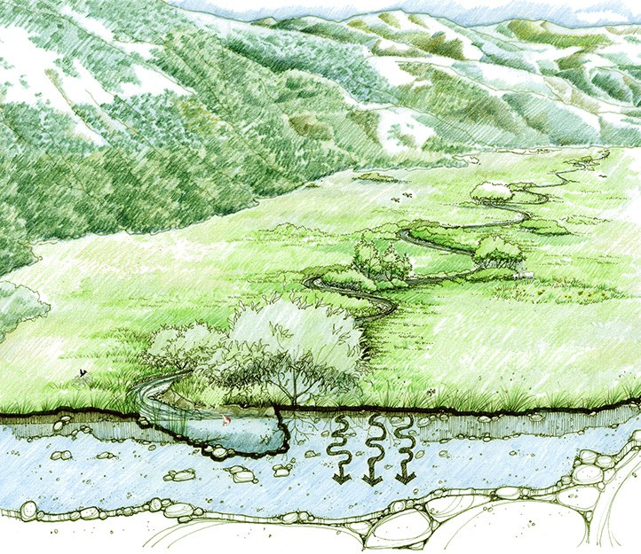Healthy meadow. Drawing: Restoration Design Group.