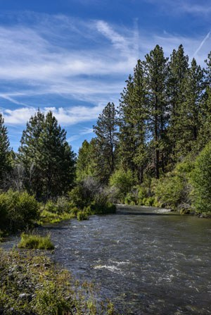 One mile of Whychus Creek flows through Willow Springs Preserve. Photo: Kris Kristovich.