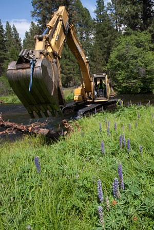 Placing logs in Spring Creek to improve fish habitat. Photo: Jay Mather.