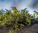 Five fun facts about lichen