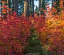 Fall Color Spectacular!