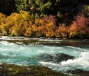 The Metolius: A River Like No Other