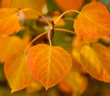Top Places for Fall Color in Central Oregon