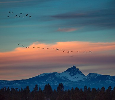 Central Oregon's Waterfowl Face New Challenges