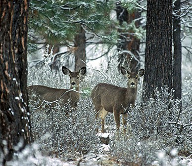 Why is winter range important for wildlife?