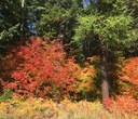 Fall colors and where to find them