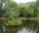 The Restoration of Trout Creek and Antelope Creek