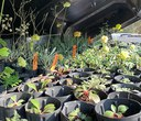 Tips + Tricks for Caring for Native Plants