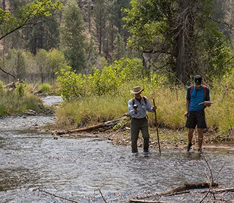 Looking at the Whychus Creek Restoration: Four Years Later