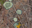 All About Lichens