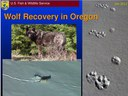 Wolf Recovery in Oregon