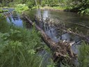 Fish habitat gets a boost at Spring Creek