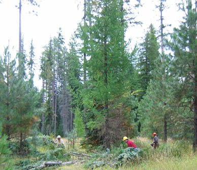 Growing Healthy Forests