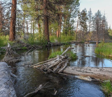 Oregon Watershed Enhancement Board Turns 20 Years Old