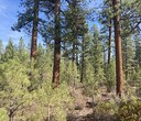 Forest Restoration Efforts at Hopkins-Young Special Management Area