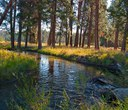 Deschutes Land Trust expands Whychus Canyon Preserve, launches new fund-raising effort