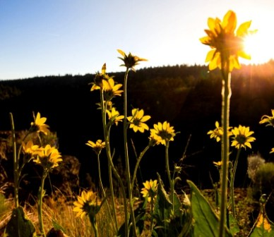 3 Spring Wildflower Hikes in Central Oregon
