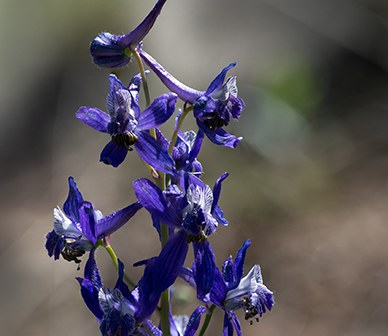 Central Oregon in Bloom: Where to Find Wildflowers