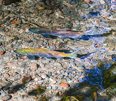 The Great Outdoors: Restoring fish populations in the Upper Deschutes River
